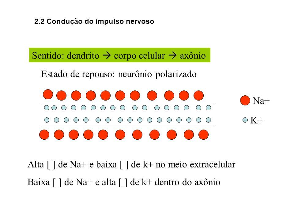 Sentido: dendrito corpo celular axônio Estado de repouso: neurônio polarizado Alta [ ] de Na+ e baixa [ ] de k+ no meio extracelular Baixa [ ] de Na+