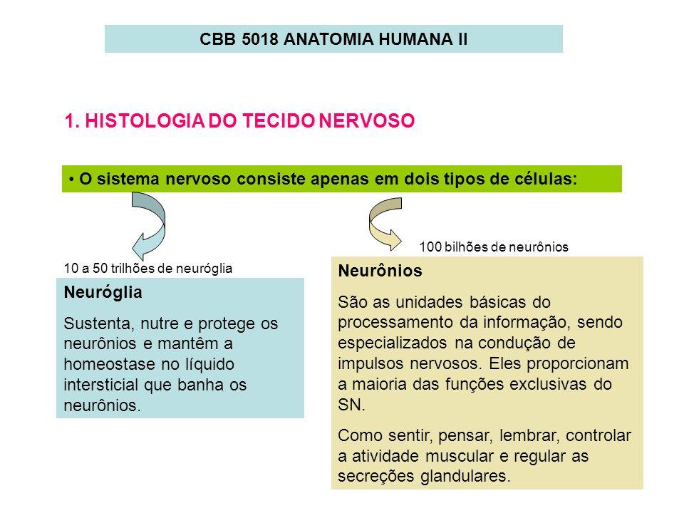 1. HISTOLOGIA DO TECIDO NERVOSO O sistema nervoso consiste apenas em dois tipos de células: Neurônios São as unidades básicas do processamento da info
