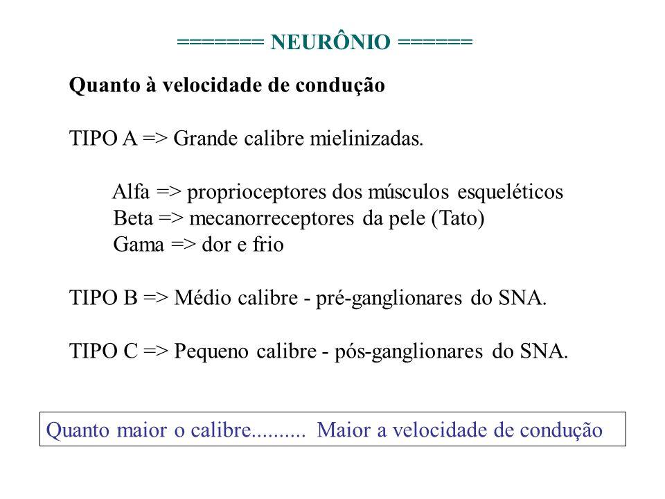 Quanto à velocidade de condução TIPO A => Grande calibre mielinizadas. Alfa => proprioceptores dos músculos esqueléticos Beta => mecanorreceptores da