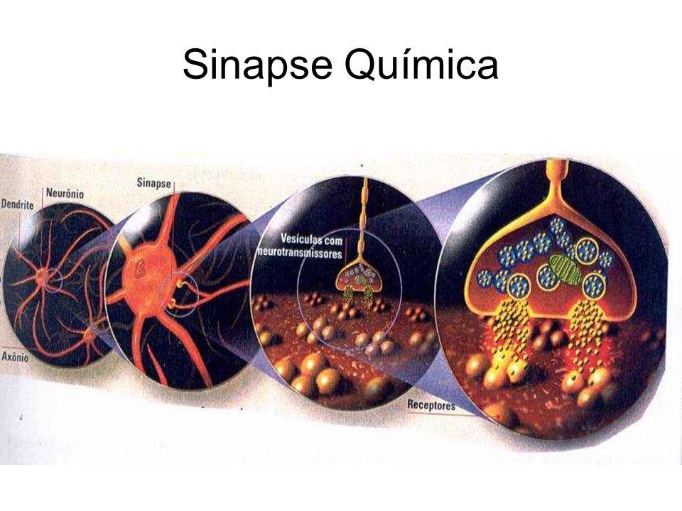 NEUROTRANSMISSORES São substâncias encontradas em vesículas próximas as sinapses, de natureza química variada, que ao serem liberadas pela fibra pré-sináptica na fenda sináptica estimulam ou inibem a fibra pós-sináptica.