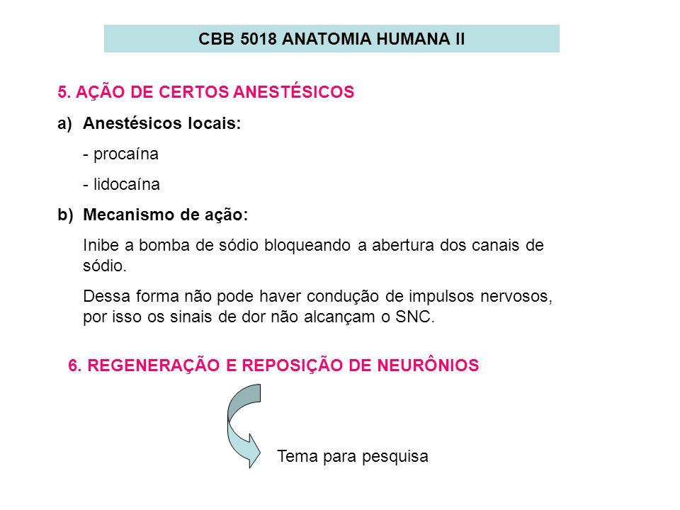 CBB 5018 ANATOMIA HUMANA II 5. AÇÃO DE CERTOS ANESTÉSICOS a)Anestésicos locais: - procaína - lidocaína b) Mecanismo de ação: Inibe a bomba de sódio bl