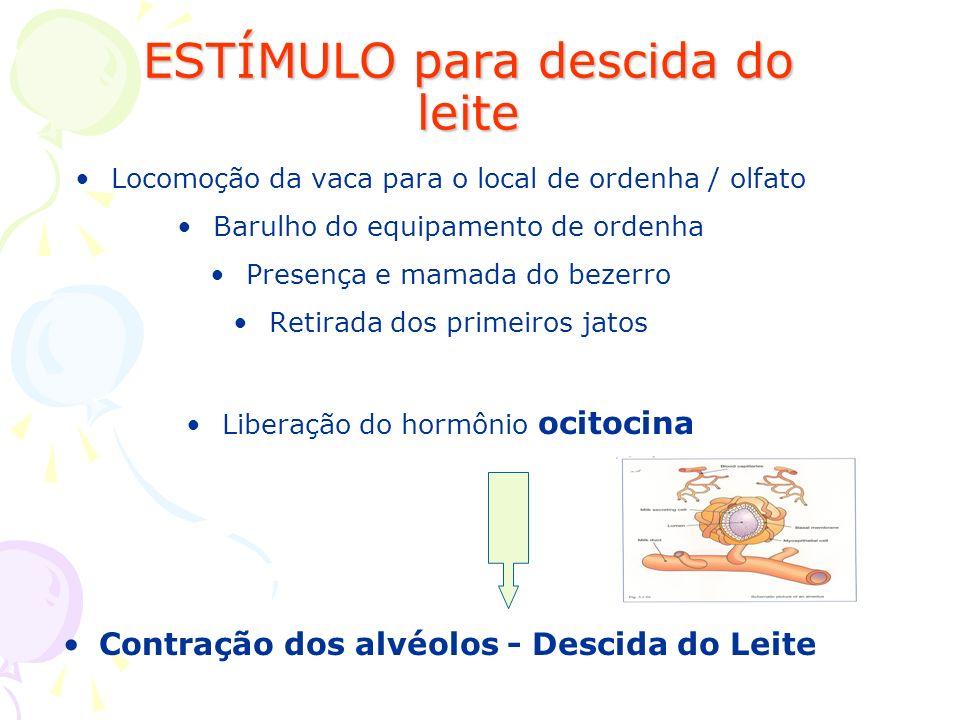 Locomoção da vaca para o local de ordenha / olfato Barulho do equipamento de ordenha Presença e mamada do bezerro Retirada dos primeiros jatos Liberaç