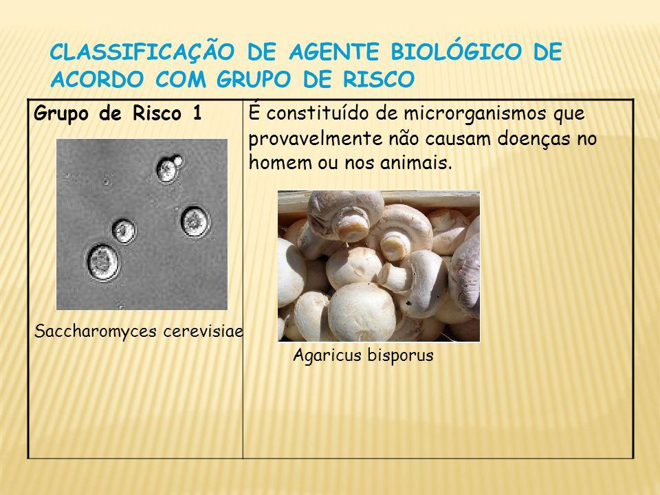 CLASSIFICAÇÃO DE AGENTE BIOLÓGICO DE ACORDO COM GRUPO DE RISCO Grupo de Risco 1 É constituído de microrganismos que provavelmente não causam doenças n