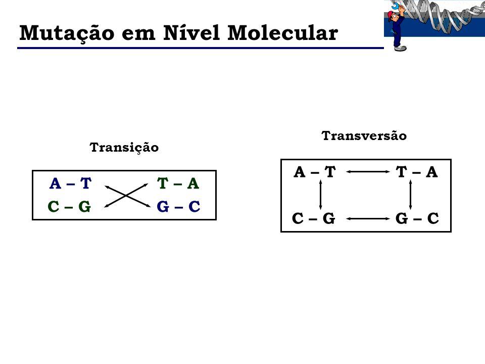 Mutação em Nível Molecular A – T T – A C – G G – C A – T T – A C – G G – C Transição Transversão