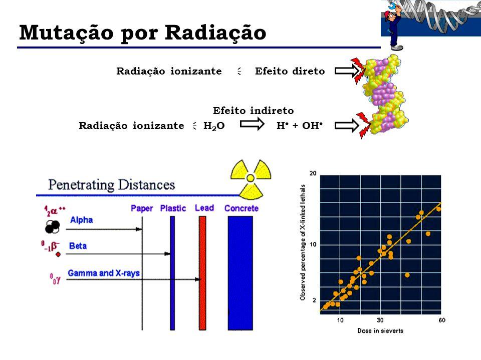 Mutação por Radiação Radiação ionizante H 2 O H + OH Radiação ionizante Efeito direto Efeito indireto