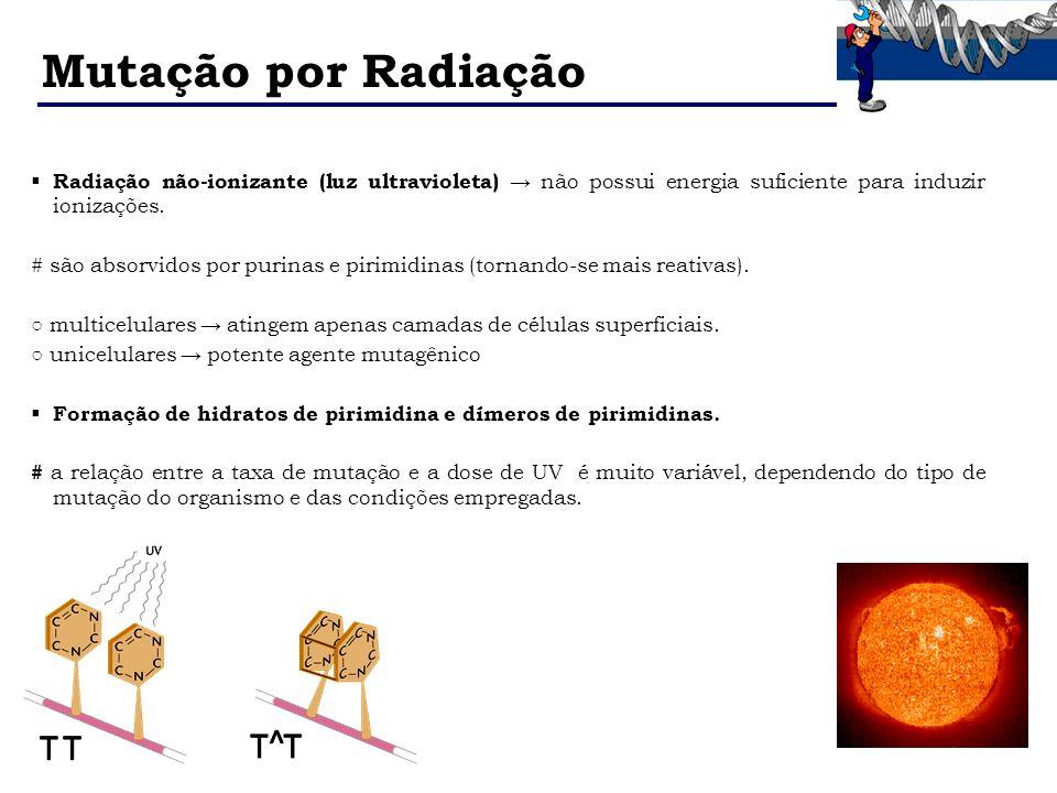 Mutação por Radiação Radiação não-ionizante (luz ultravioleta) não possui energia suficiente para induzir ionizações. # são absorvidos por purinas e p