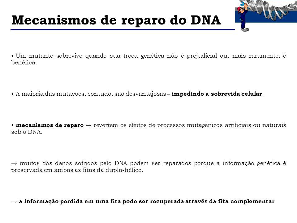Mecanismos de reparo do DNA Um mutante sobrevive quando sua troca genética não é prejudicial ou, mais raramente, é benéfica. A maioria das mutações, c