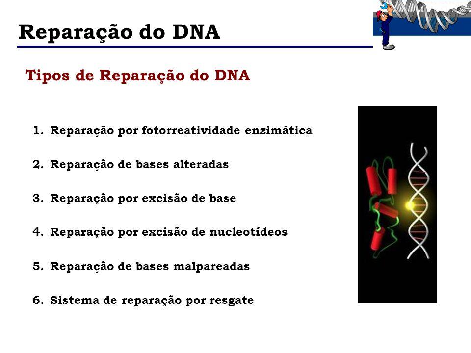 Reparação do DNA Tipos de Reparação do DNA 1.Reparação por fotorreatividade enzimática 2.Reparação de bases alteradas 3.Reparação por excisão de base