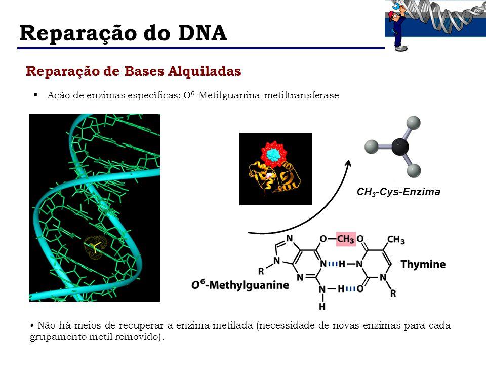 Reparação do DNA Reparação de Bases Alquiladas Ação de enzimas específicas: O 6 -Metilguanina-metiltransferase CH 3 -Cys-Enzima Não há meios de recupe