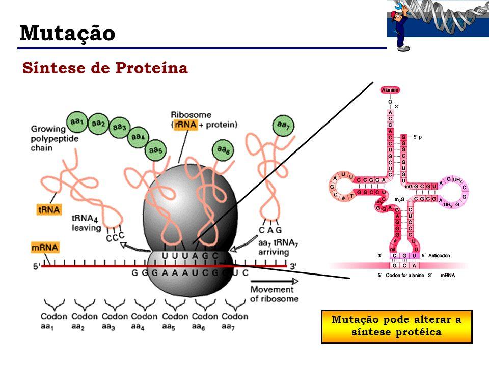 Mutação Síntese de Proteína Mutação pode alterar a síntese protéica