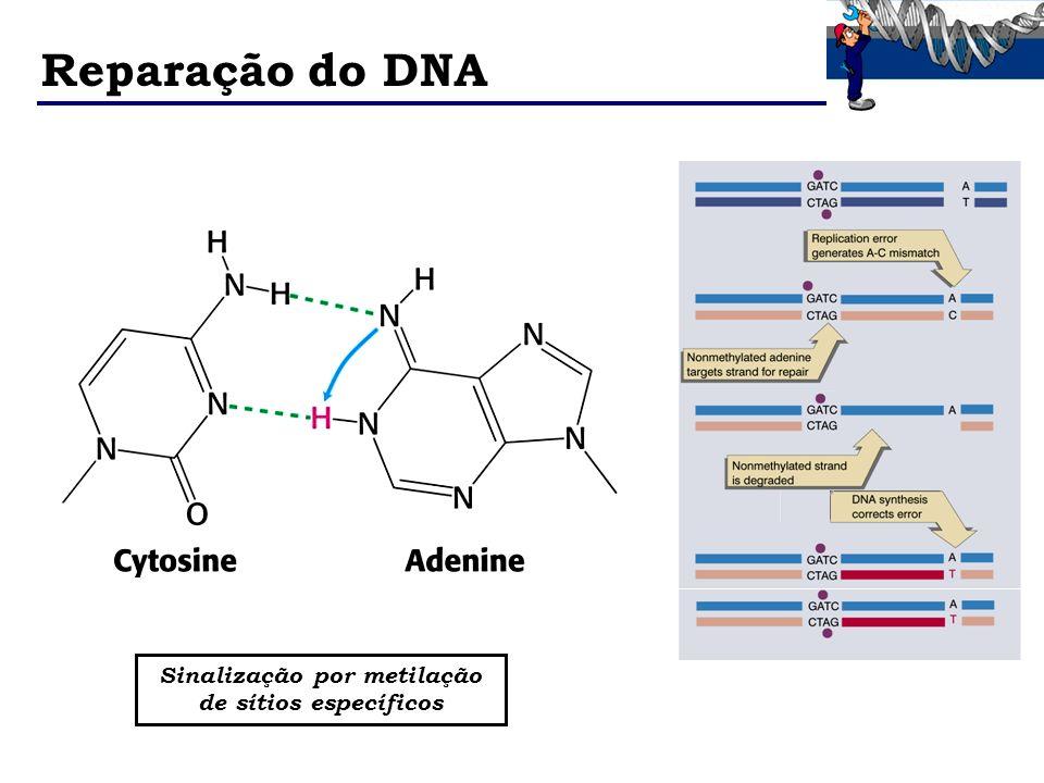 Reparação do DNA Sinalização por metilação de sítios específicos