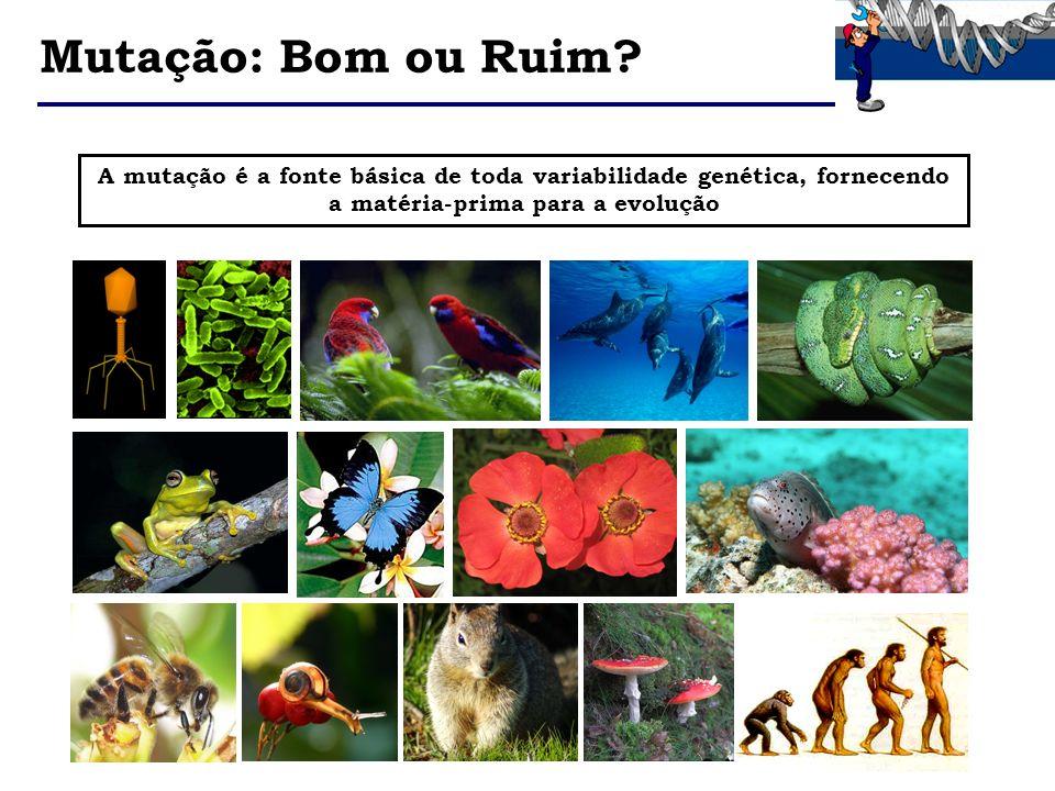 A mutação é a fonte básica de toda variabilidade genética, fornecendo a matéria-prima para a evolução Mutação: Bom ou Ruim?