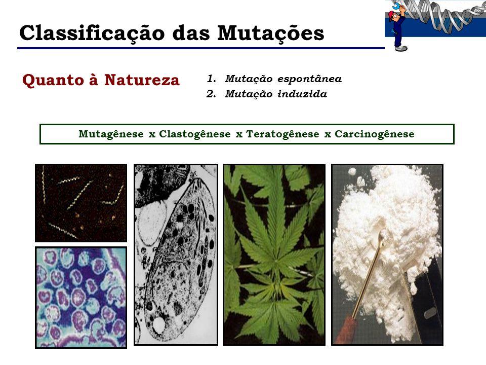 Classificação das Mutações 1.Mutação espontânea 2.Mutação induzida Mutagênese x Clastogênese x Teratogênese x Carcinogênese Quanto à Natureza