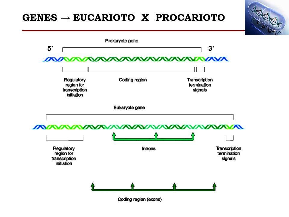 GENES EUCARIOTO X PROCARIOTO 53