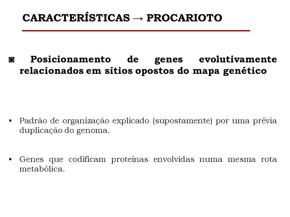 Posicionamento de genes evolutivamente relacionados em sítios opostos do mapa genético Padrão de organização explicado (supostamente) por uma prévia d
