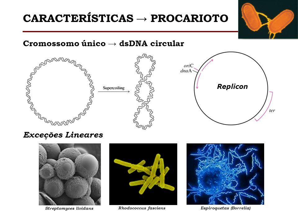 Cromossomo único dsDNA circular Replicon Exceções Lineares Streptomyces lividans Rhodococcus fasciensEspiroquetas (Borrelia) CARACTERÍSTICAS PROCARIOT