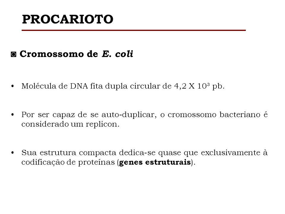 Existem diferenças significativas entre genomas procariotos e eucariotos.