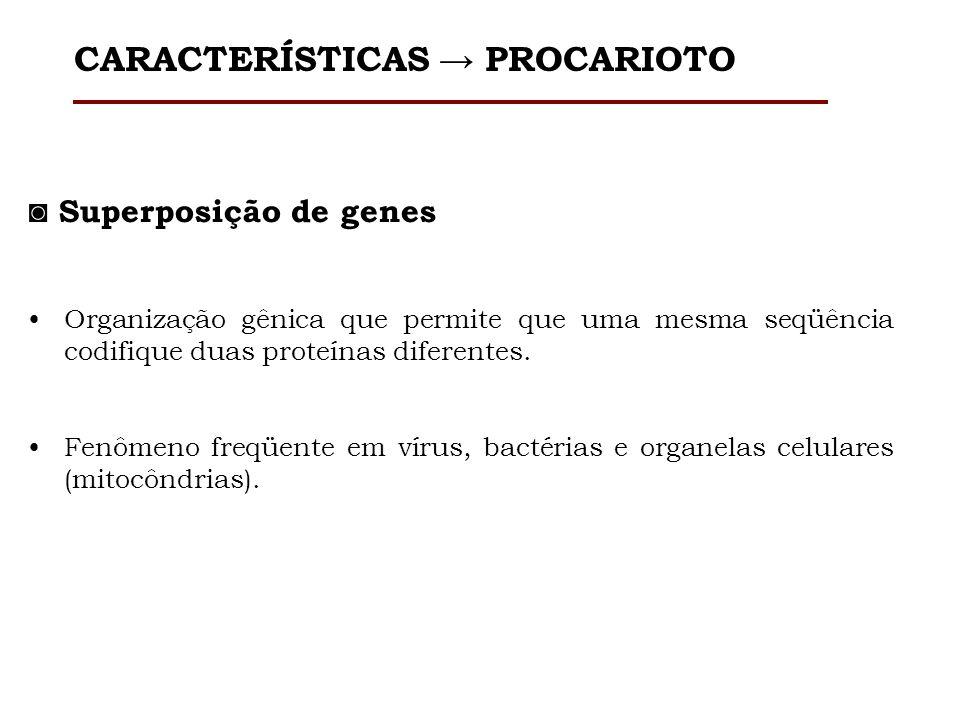 Cromossomo único dsDNA circular Replicon Exceções Lineares Streptomyces lividans Rhodococcus fasciensEspiroquetas (Borrelia) CARACTERÍSTICAS PROCARIOTO