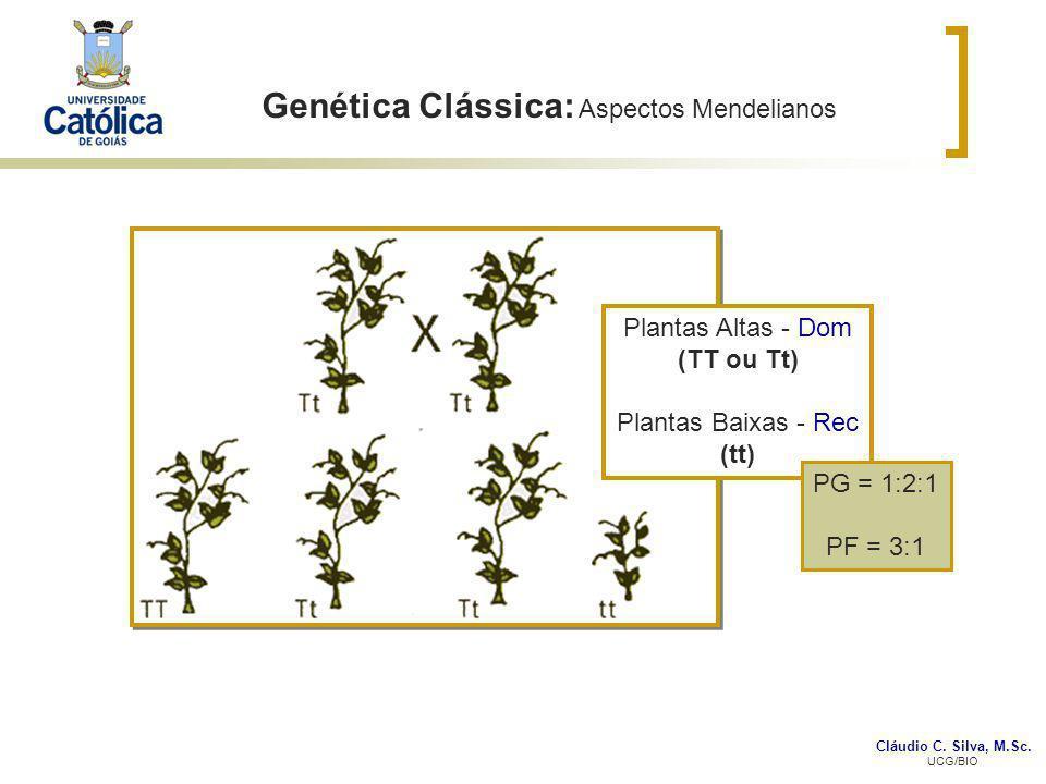 Cláudio C. Silva, M.Sc. UCG/BIO Genética Clássica: Aspectos Mendelianos Plantas Altas - Dom (TT ou Tt) Plantas Baixas - Rec (tt) PG = 1:2:1 PF = 3:1