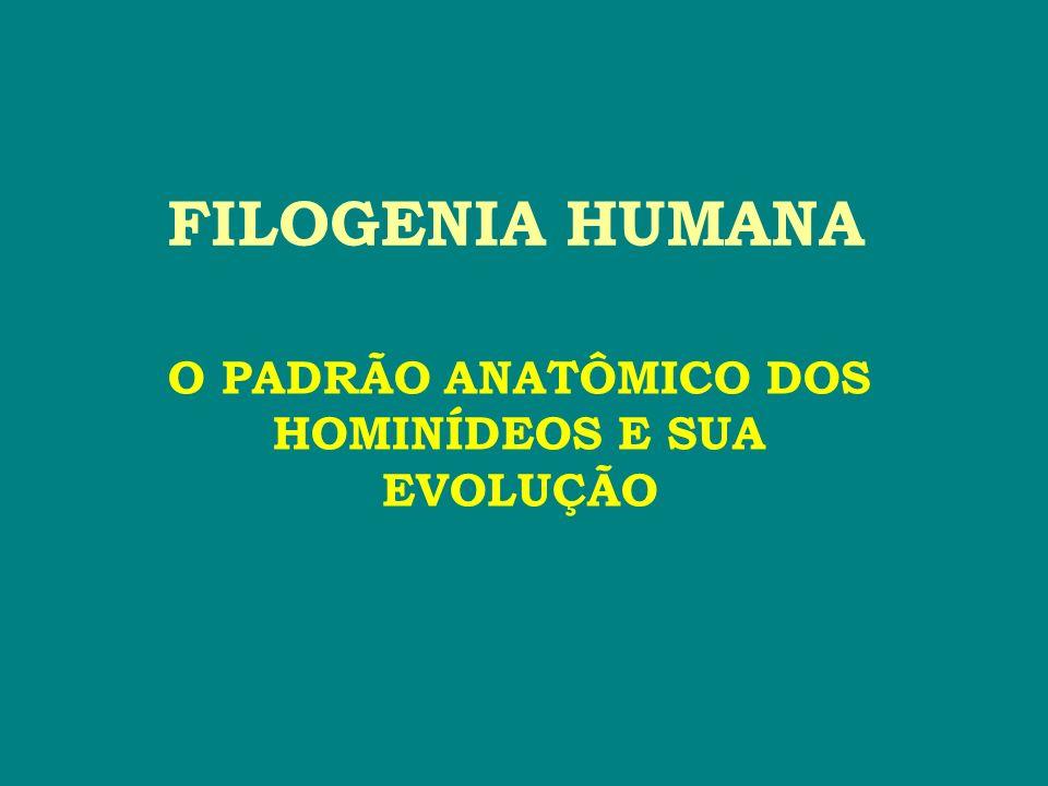 FILOGENIA HUMANA O PADRÃO ANATÔMICO DOS HOMINÍDEOS E SUA EVOLUÇÃO
