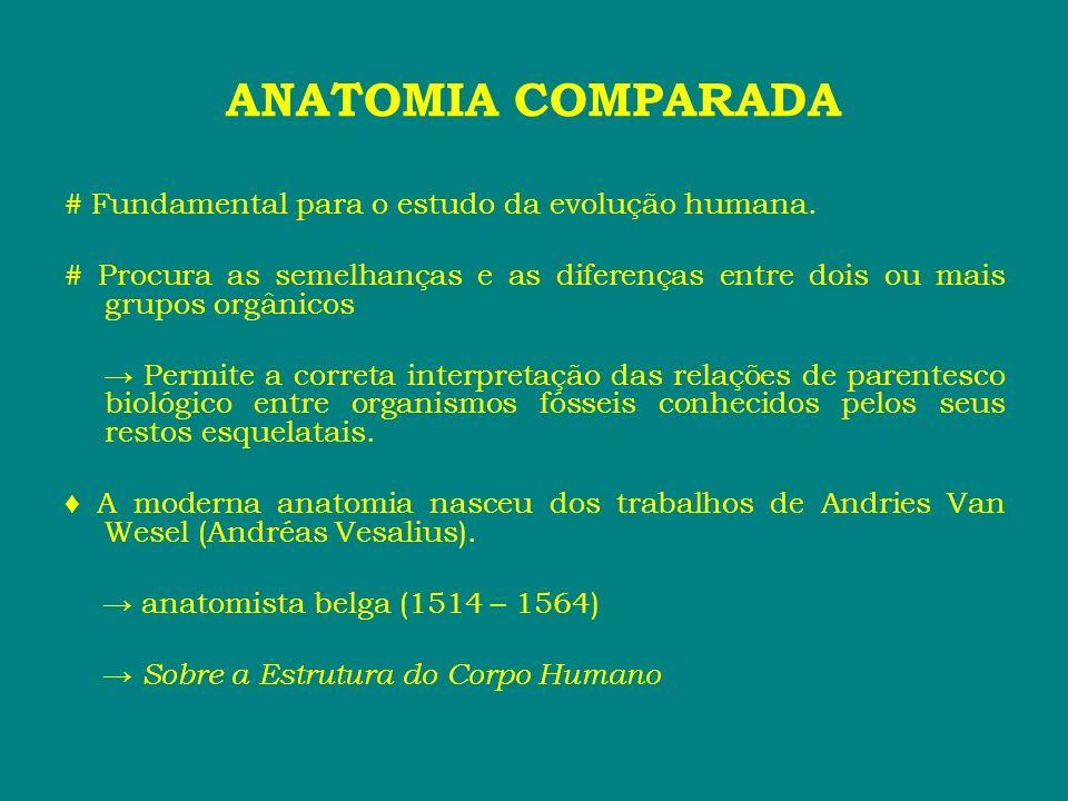 ANATOMIA COMPARADA # Fundamental para o estudo da evolução humana. # Procura as semelhanças e as diferenças entre dois ou mais grupos orgânicos Permit