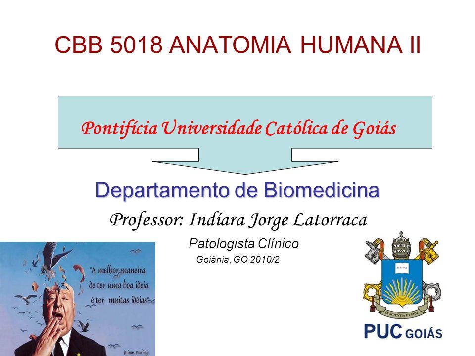 CBB 5018 ANATOMIA HUMANA II Pontifícia Universidade Católica de Goiás Departamento de Biomedicina Professor: Indíara Jorge Latorraca Patologista Clíni