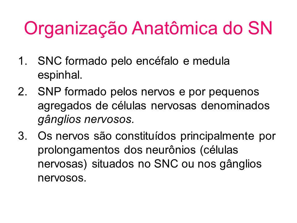 Organização Anatômica do SN 1.SNC formado pelo encéfalo e medula espinhal. 2.SNP formado pelos nervos e por pequenos agregados de células nervosas den