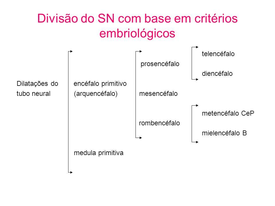 Divisão do SN com base em critérios embriológicos telencéfalo prosencéfalo diencéfalo Dilatações do encéfalo primitivo tubo neural (arquencéfalo) mese