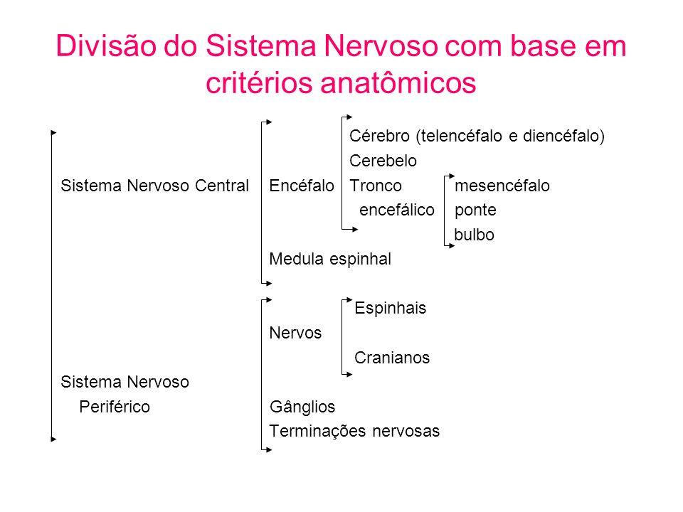 Divisão do Sistema Nervoso com base em critérios anatômicos Cérebro (telencéfalo e diencéfalo) Cerebelo Sistema Nervoso Central Encéfalo Tronco mesenc