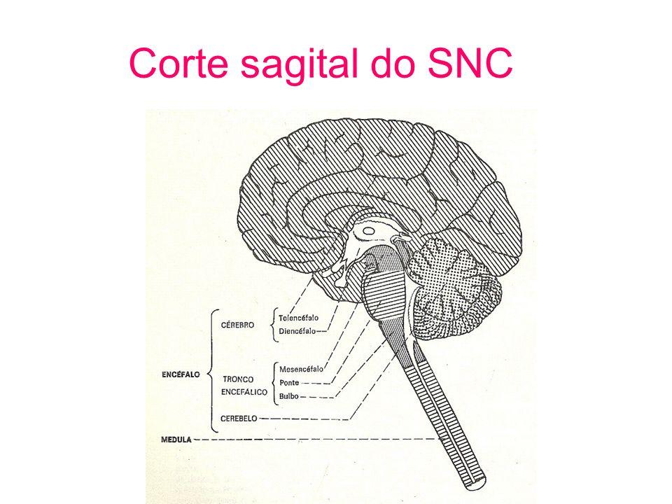 Corte sagital do SNC