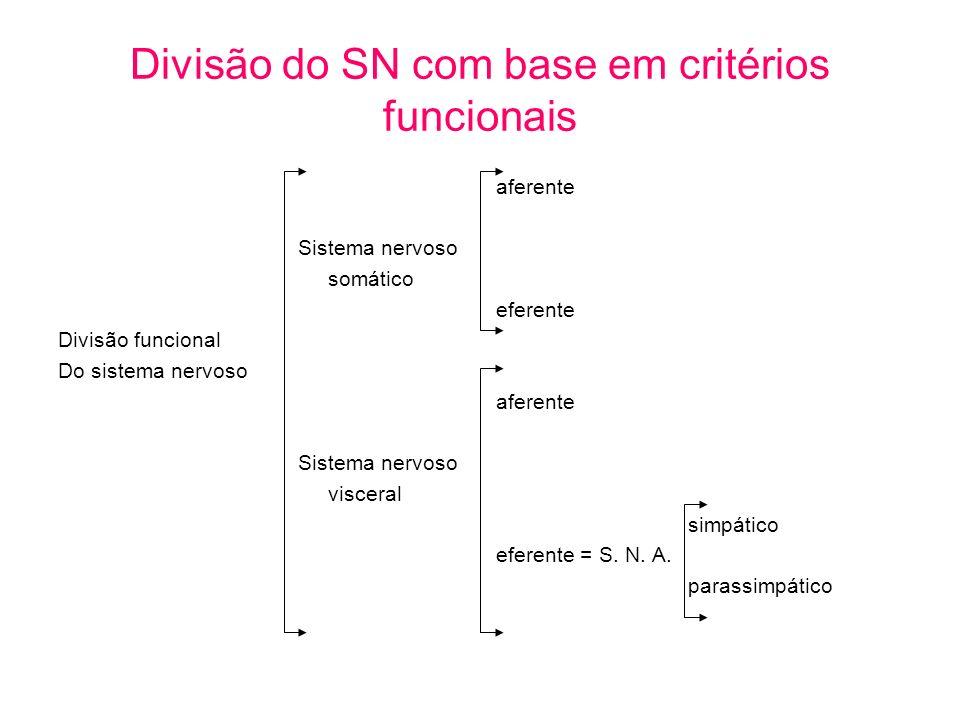 Divisão do SN com base em critérios funcionais aferente Sistema nervoso somático eferente Divisão funcional Do sistema nervoso aferente Sistema nervos