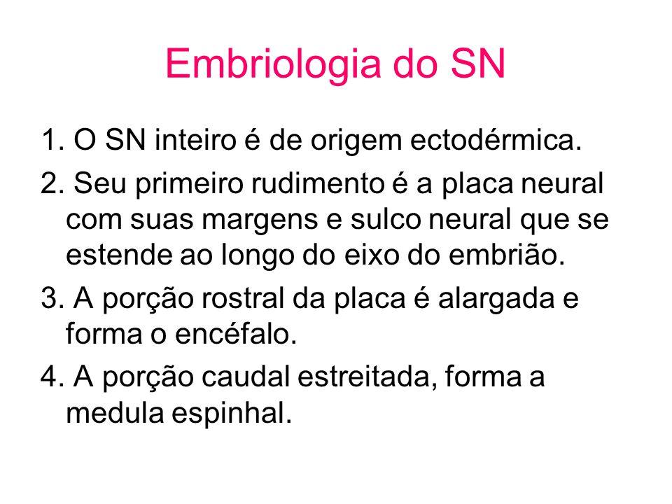 Embriologia do SN 1. O SN inteiro é de origem ectodérmica. 2. Seu primeiro rudimento é a placa neural com suas margens e sulco neural que se estende a