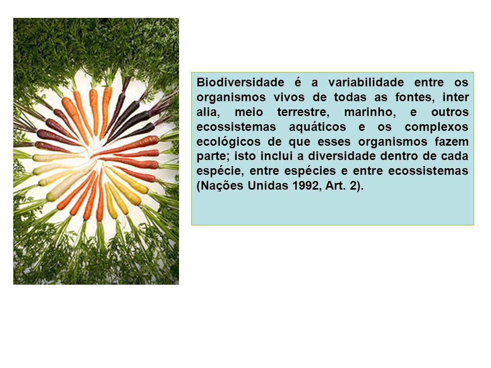 ATIVIDADE PARA A AULA DO DIA 26/02/09 (QUINTA-FEIRA).