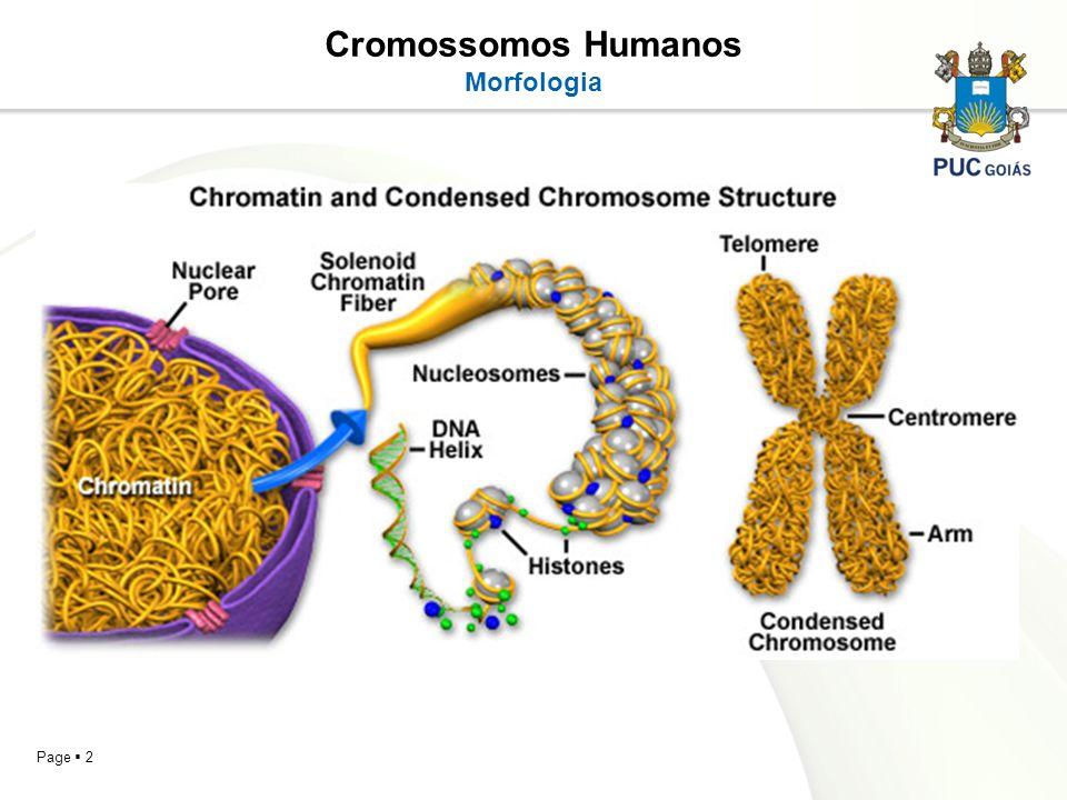 Page 2 Cromossomos Humanos Morfologia