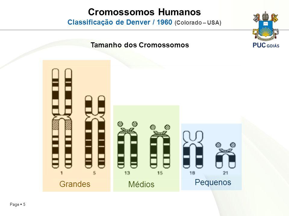 Page 5 Tamanho dos Cromossomos Cromossomos Humanos Classificação de Denver / 1960 (Colorado – USA) Grandes Médios Pequenos