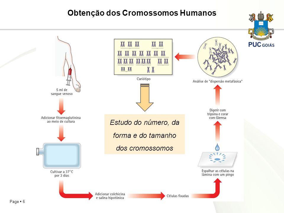 Page 6 Obtenção dos Cromossomos Humanos Estudo do número, da forma e do tamanho dos cromossomos