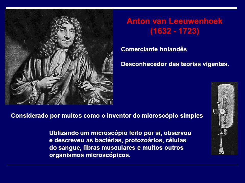Anton van Leeuwenhoek (1632 - 1723) Comerciante holandês Desconhecedor das teorias vigentes. Utilizando um microscópio feito por si, observou e descre