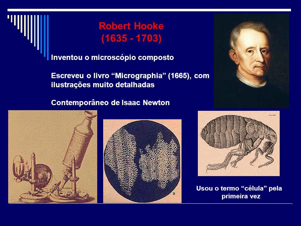 Robert Hooke (1635 - 1703) Inventou o microscópio composto Escreveu o livro Micrographia (1665), com ilustrações muito detalhadas Contemporâneo de Isa