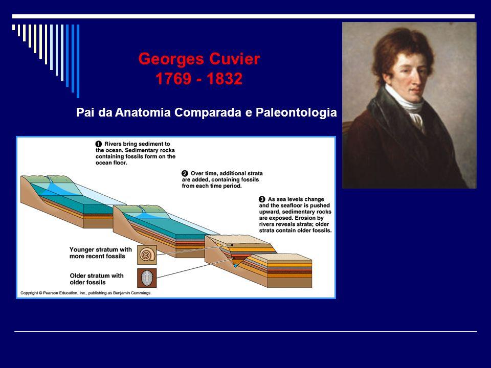 Georges Cuvier 1769 - 1832 Pai da Anatomia Comparada e Paleontologia