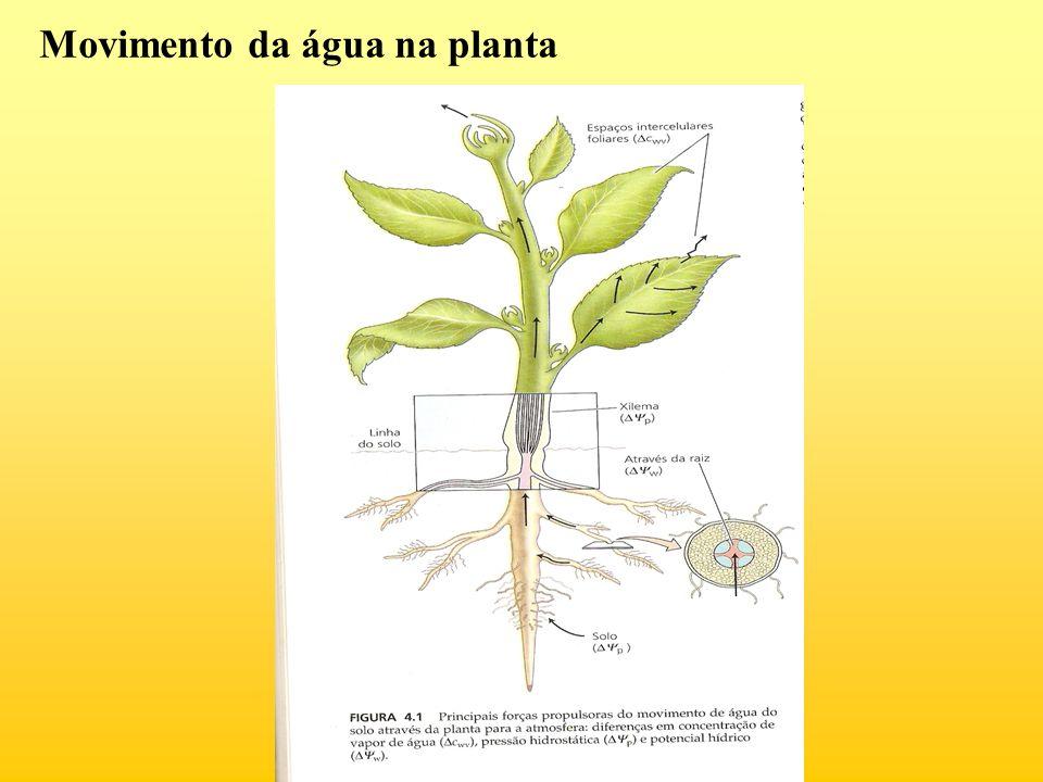 Movimento da água na planta