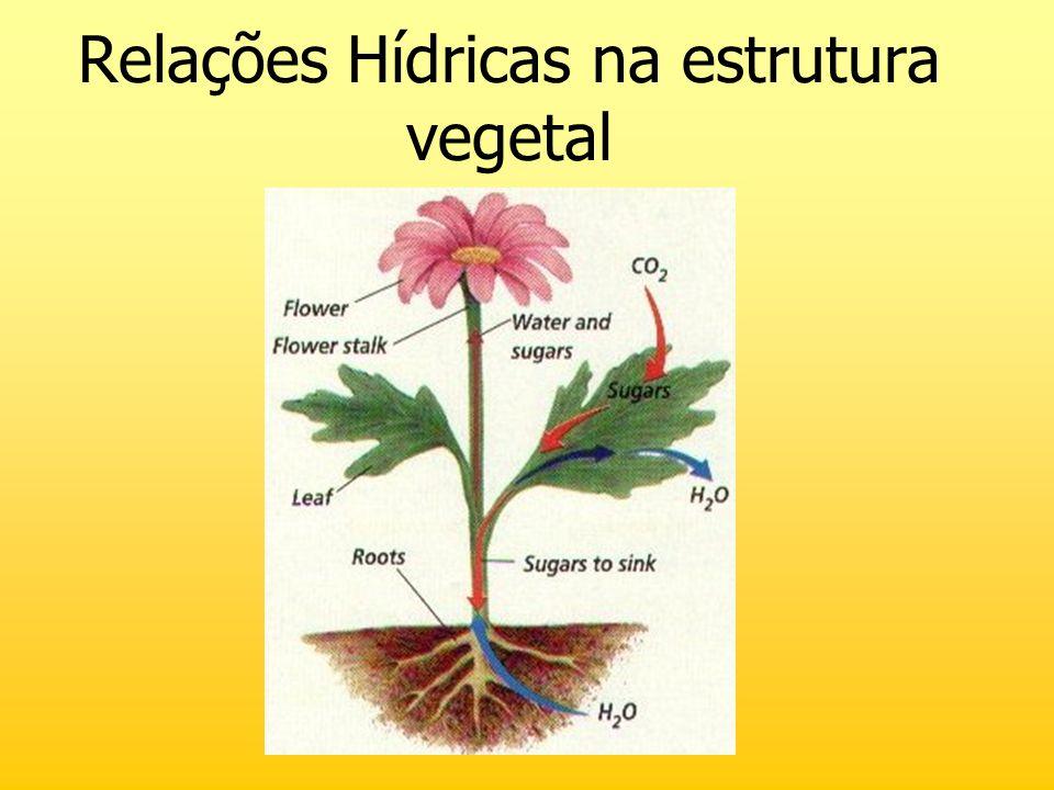 Relações Hídricas na estrutura vegetal