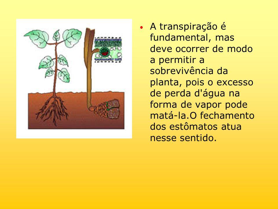 A transpiração é fundamental, mas deve ocorrer de modo a permitir a sobrevivência da planta, pois o excesso de perda d'água na forma de vapor pode mat