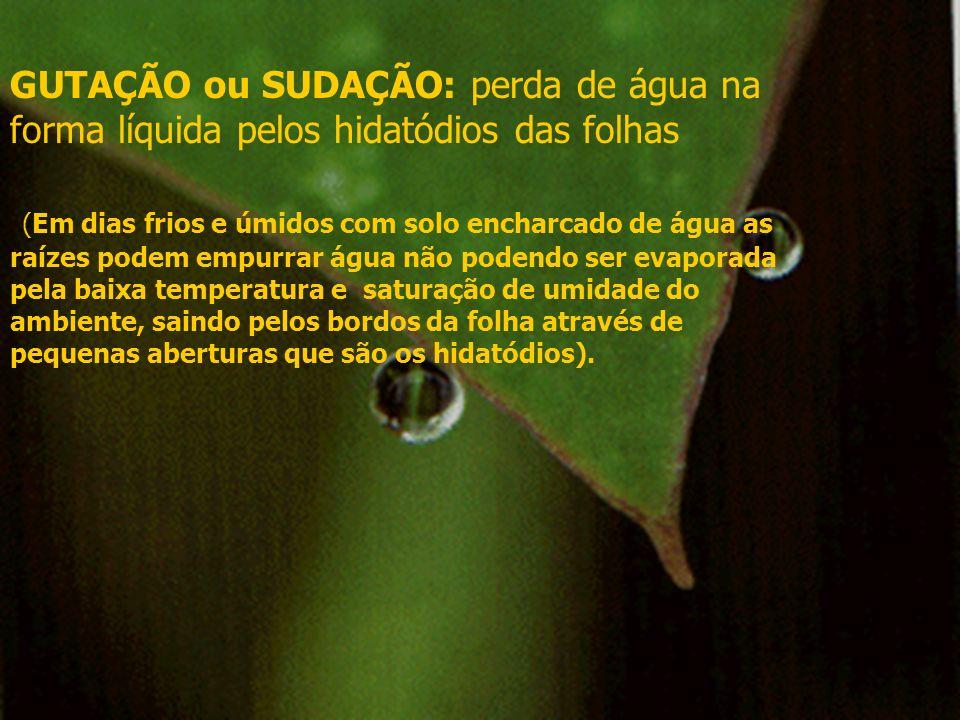 GUTAÇÃO ou SUDAÇÃO: perda de água na forma líquida pelos hidatódios das folhas (Em dias frios e úmidos com solo encharcado de água as raízes podem emp