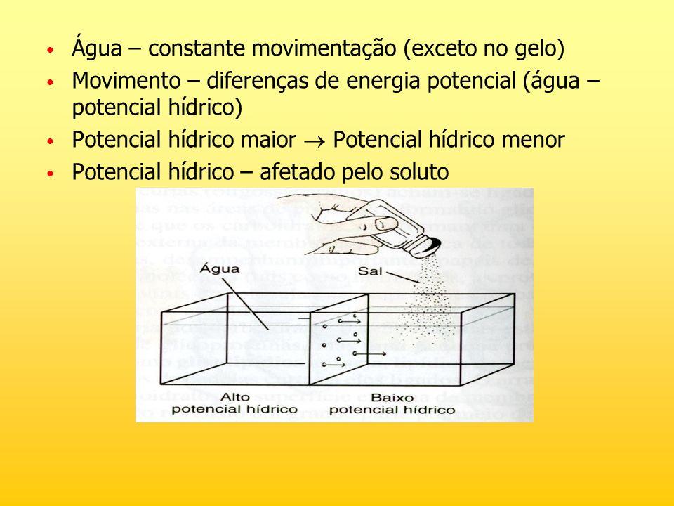 Água – constante movimentação (exceto no gelo) Movimento – diferenças de energia potencial (água – potencial hídrico) Potencial hídrico maior Potencia