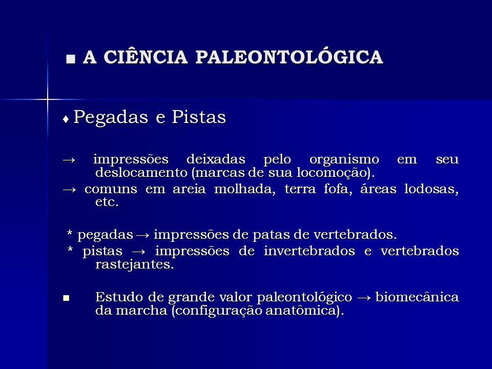 A CIÊNCIA PALEONTOLÓGICA A CIÊNCIA PALEONTOLÓGICA Pegadas e Pistas Pegadas e Pistas impressões deixadas pelo organismo em seu deslocamento (marcas de