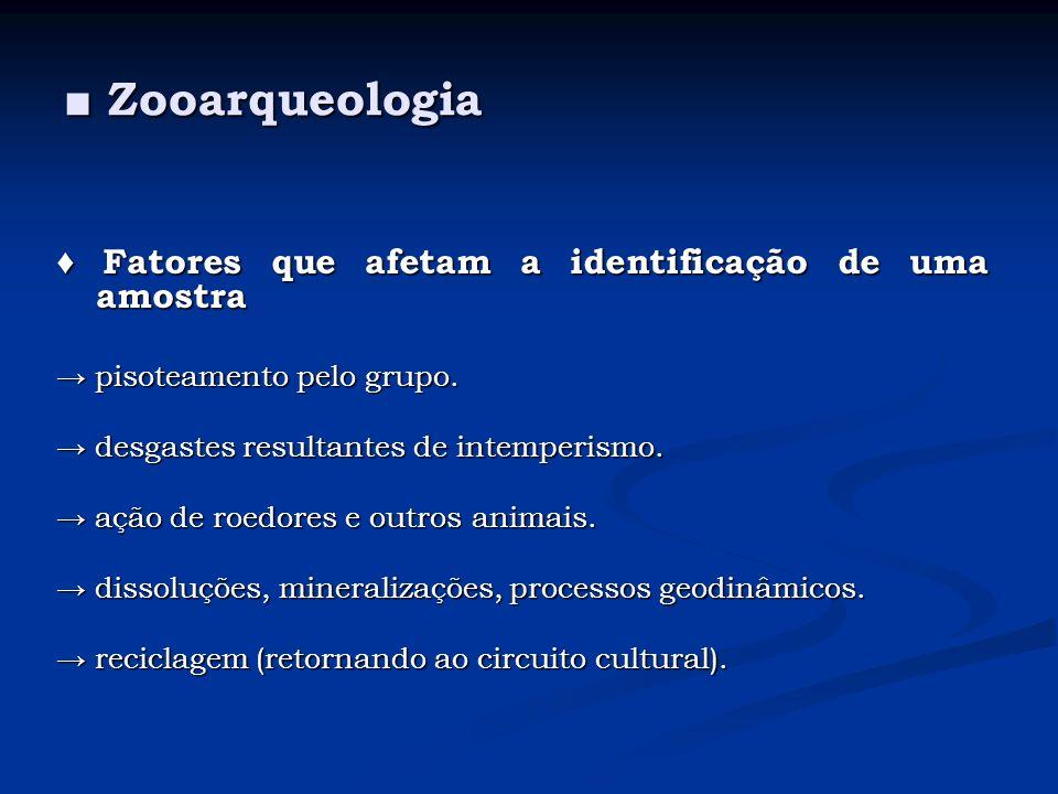 Zooarqueologia Zooarqueologia Fatores que afetam a identificação de uma amostra Fatores que afetam a identificação de uma amostra experiência e habilidade do analista.