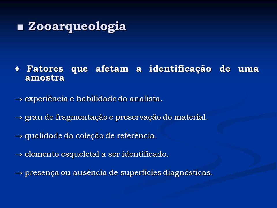 Zooarqueologia Zooarqueologia Fatores que afetam a identificação de uma amostra Fatores que afetam a identificação de uma amostra experiência e habili