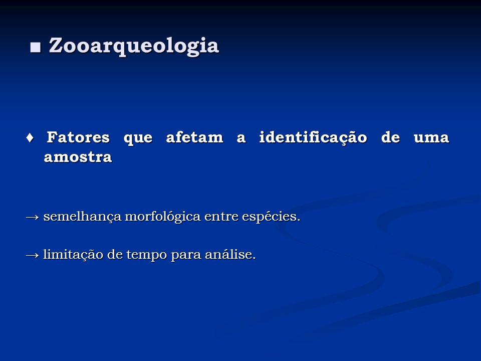 Zooarqueologia Zooarqueologia Fatores que afetam a identificação de uma amostra Fatores que afetam a identificação de uma amostra semelhança morfológi