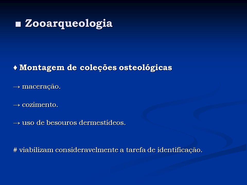 Zooarqueologia Zooarqueologia Montagem de coleções osteológicas Montagem de coleções osteológicas maceração. maceração. cozimento. cozimento. uso de b