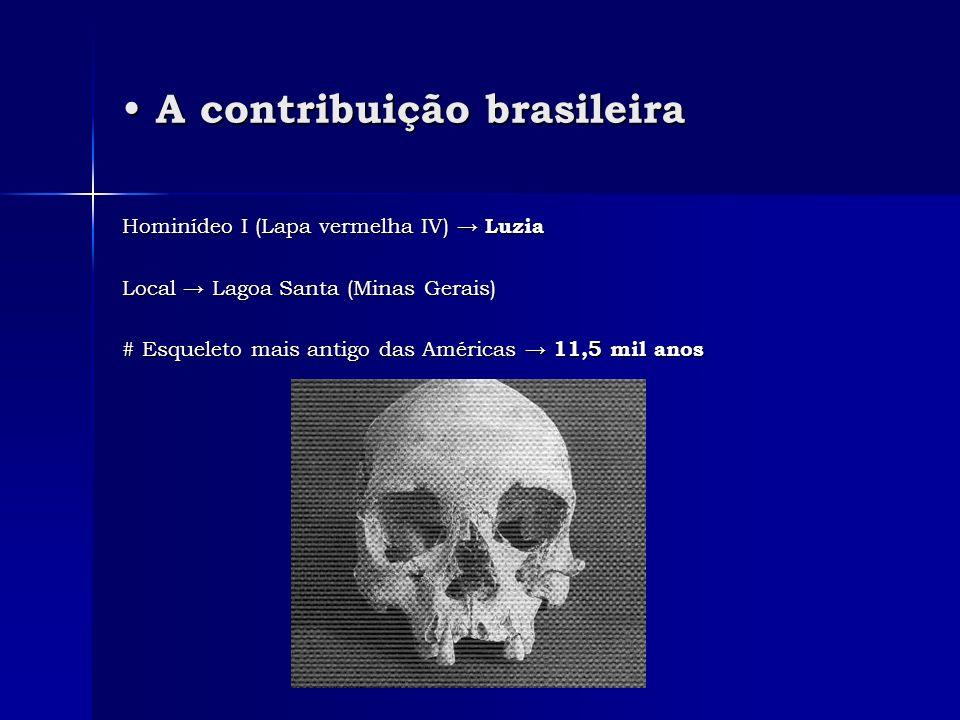 A contribuição brasileira A contribuição brasileira Hominídeo I (Lapa vermelha IV) LuziaHominídeo I (Lapa vermelha IV) Luzia Local Lagoa Santa (Minas